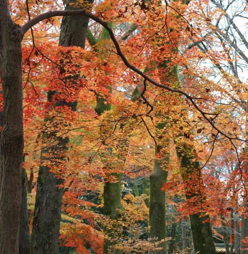 京都の子連れ紅葉